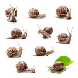 collage of snails on white background