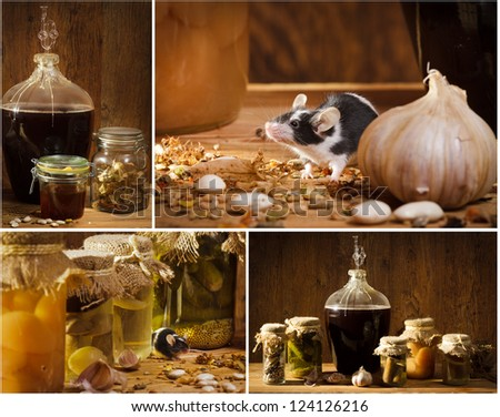 Collage of stocks jar in the basement with small mouse