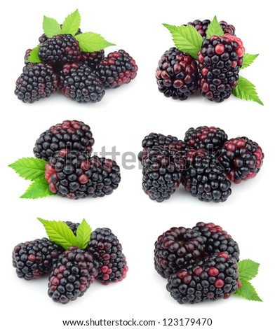 Collage of sweet blackberry fruit close up on white
