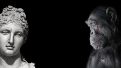 Collage of two contrast portraits of Chimpanzee and beautiful Roman woman in stone at black background
