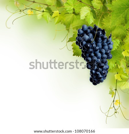 Collage of vine leaves and blue grape on white background
