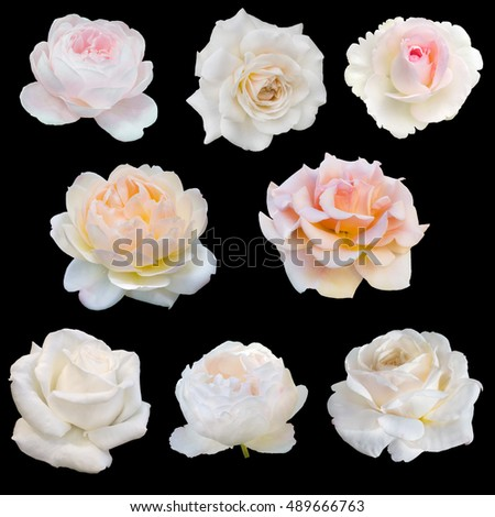 collage of white roses isolated on black background #489666763