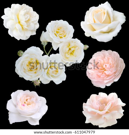 collage of white roses isolated on black background #611047979