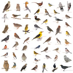 collage of wild birds with names isolated on a white background