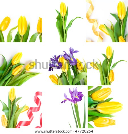 collage of yellow spring tulips and irises - stock photo