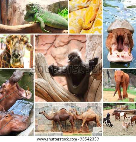 Collage photo of some wild animals in the zoo. at Nakhon Ratchasima city in thailand