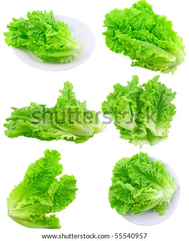 Collage (set) of fresh Leaf of lettuce . Isolated