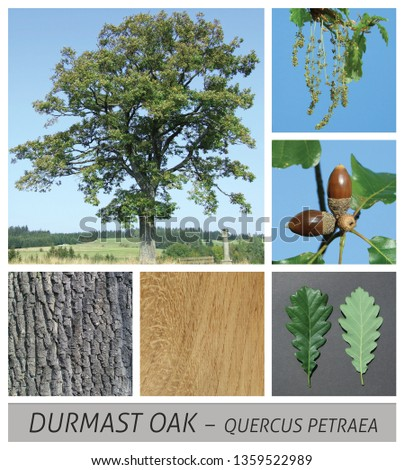 Collage tree species with detail photos of flowers and fruits and leaves #1359522989