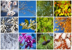 Collage. Twelve months. Calendar. Colorful natural backgrounds. Trees in different seasons