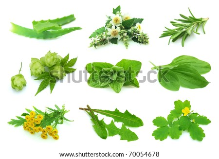 Collage various  herbs on a white background