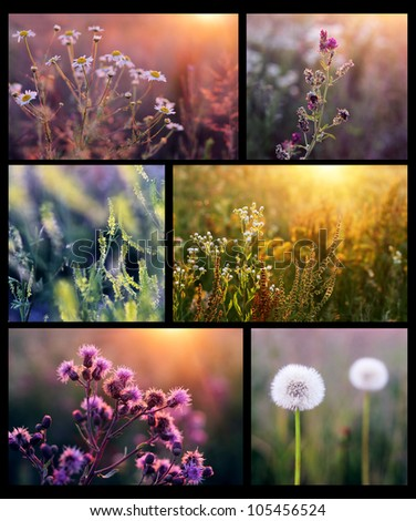 Collage with beautiful flowers in the sunshine