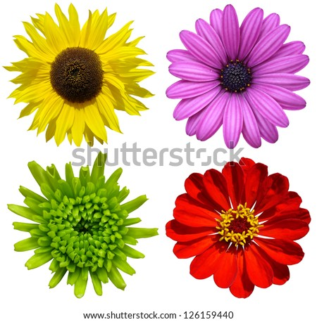 collage with colorful flowers isolated