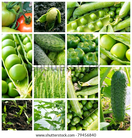 Collage with fresh natural vegetables.