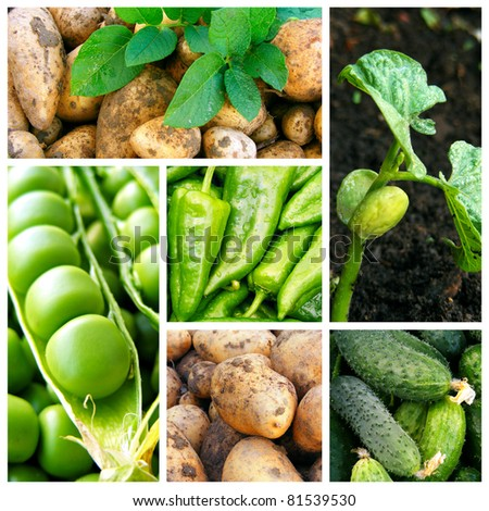 Collage with fresh natural vegetables