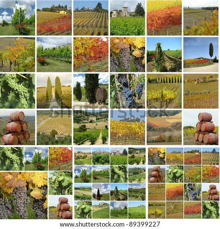 collage with italian vineyards in spring, summer and autumn