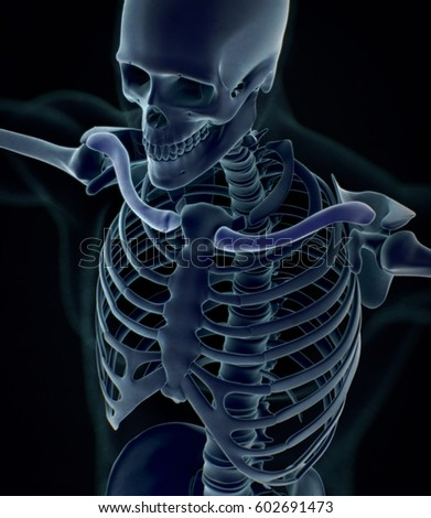 collar bone xray. human anatomy skeletal system, torso, ribs. 3d, Skeleton