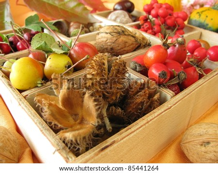 Collecting box with walnuts, chestnuts and other fall fruits