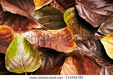 collection beautiful colorful autumn leaves background