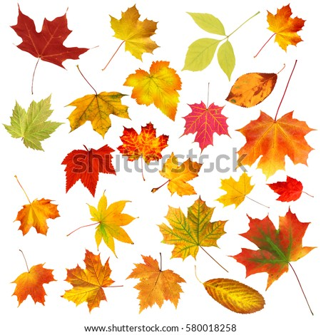 Stock Photo collection beautiful colourful autumn leaves isolated on white background