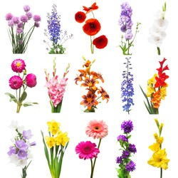 Collection beautiful flowers assorted delphinium, gladiolus, lily, poppy, daffodil, gerbera, bell isolated on white background. Set flowers red, pink, purple, orange and yellow. Flat lay, top view