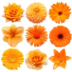 Collection beautiful head orange flowers of gerbera, hemerocallis , rose, dahlia, chrysanthemum, calendula, lily isolated on white background. Beautiful floral delicate composition. Flat lay, top view