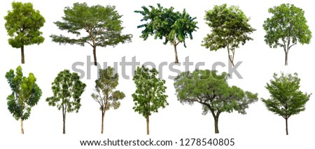 Collection Beautiful Trees Isolated on white background.