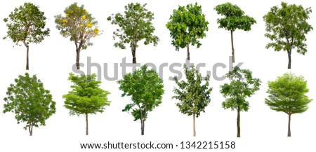 Collection Beautiful Trees Isolated on white background , Suitable for use in architectural design , Decoration work , Used with natural articles both on print and website. #1342215158