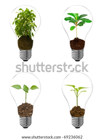 collection bulb on a white background