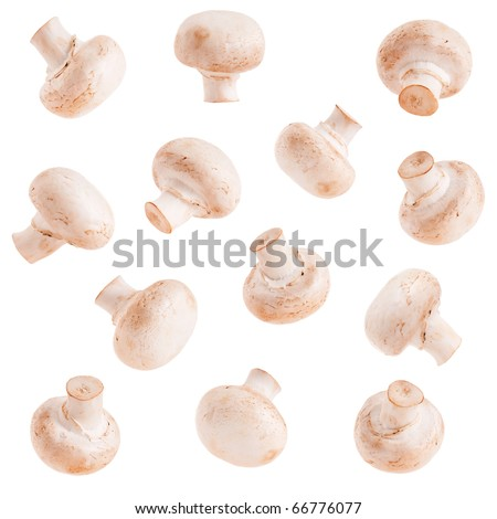 Collection fresh mushrooms champignons isolated on white background