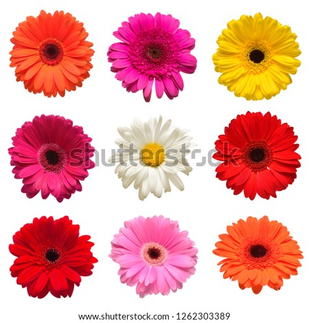 Collection head flowers chamomile, gerbera and calendula  isolated on white background. Fashionable creative floral composition. Summer, spring. Flat lay, top view