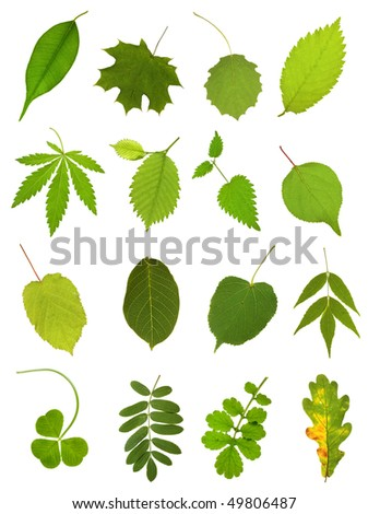 Collection leaves isolated on white