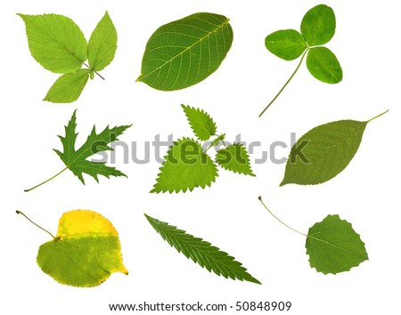 Collection leaves isolated on white - stock photo