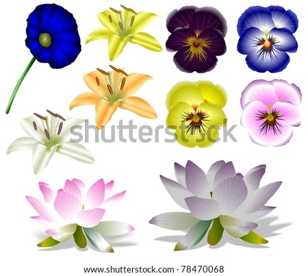Collection of a colorful flowers with white background / flowers collection