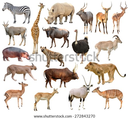 collection of africa animals isolated on white background #272843270