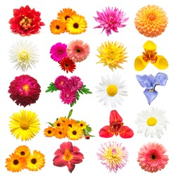 Collection of assorted calendula flowers, dahlia, lily, chamomile, iris, chrysanthemum, daisies, gerbera isolated on white background. Bridal bouquet, fashionable plants. Flat lay, top view. Love