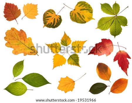 Collection of autumn leaves isolated on white background