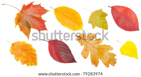 collection of autumn leaves, isolated on white background