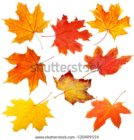 Collection of autumn leaves on white background #520409554