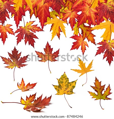 collection of autumn leaves to your design