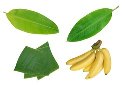 Collection of banana and banana leaf isolated on white background, Closeup rip banana and fresh banana leave set for wallpaper,