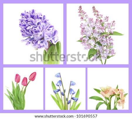 collection of beautiful fresh flowers