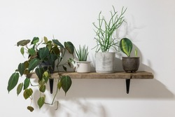 Collection of beautiful tropical plants on wooden shelf