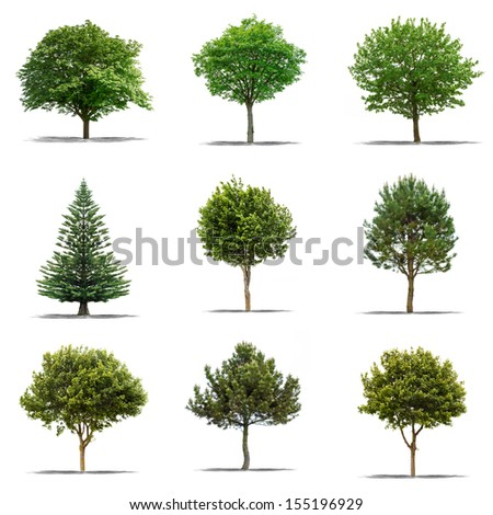 Collection of Beautifull green tree on a white background in high definition