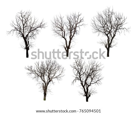 Collection of black tree silhouettes isolated on white background , silhouette of trees