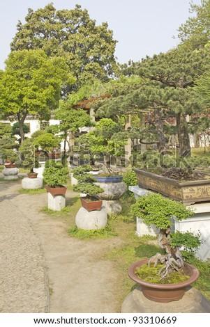 Collection of bonsai trees in a garden