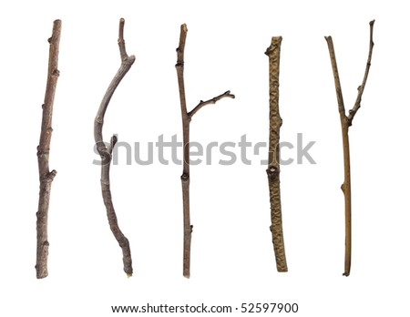 collection of branches