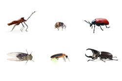 Collection of Bug (Insect) isolate on white
