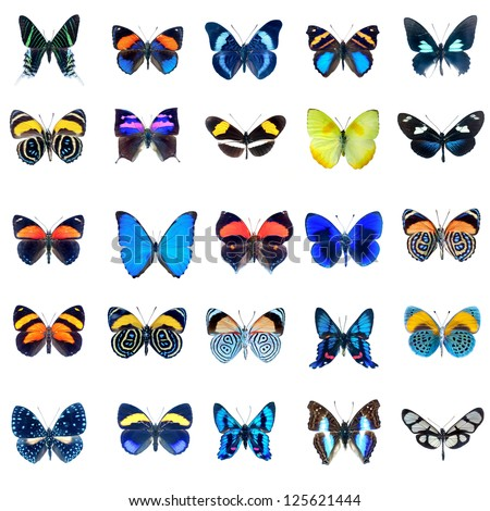 Collection of butterflies in high definition on a white background