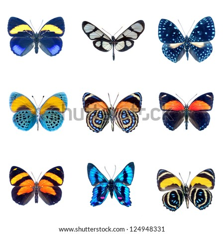 collection of Butterflies on a white background