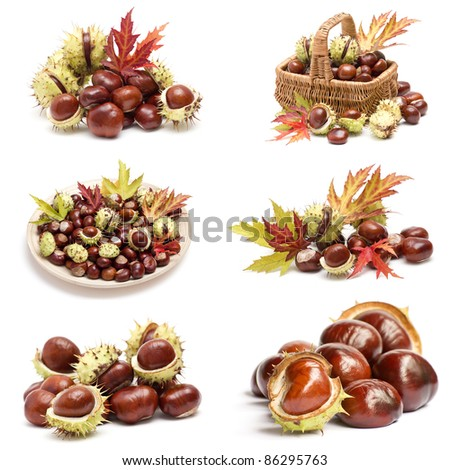 collection of chestnuts and autumnal leaves - stock photo
